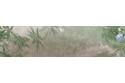 Insectes mécaniques